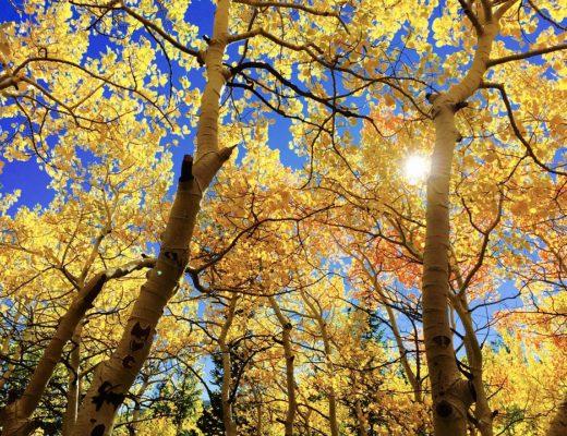 leaves-1363766_960_720